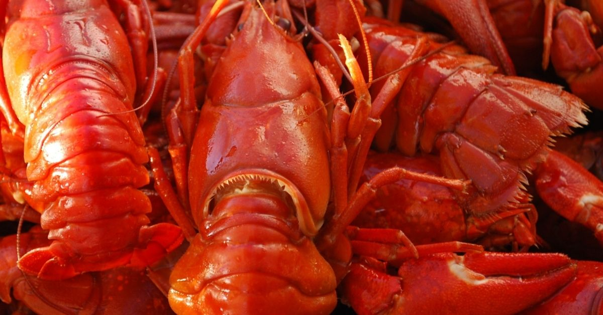 How Long To Boil Crayfish Recipe